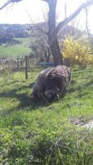 Leckeres Futter für unsere Schafe