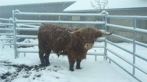 Jonny geniesst den Schnee!